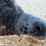 Shell Beach – Nistplatz für Meeresschildkröten