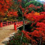 Setouchi – in 88 Etappen zur Erleuchtung pilgern