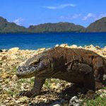 Komodo-Nationalpark: 1.000 Dollar Eintritt ab 2021