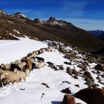 Ötztaler Schaftrieb nun Immaterielles Kulturerbe