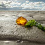 Bernstein – das Gold der Nordsee-Küste