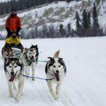 Yukon – ein wildes und ungezähmtes Stück Kanada
