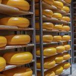 Gouda Cheese Experience: Alles rund um den Käse