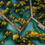 Neues Naturerlebnis im Jubail Mangrove Park