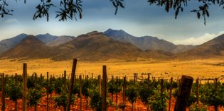 Wine Trails, Wein-Festivals und Winzer in Arizona