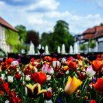 Bad Driburg: Frühling erwacht im Gräflichen Park