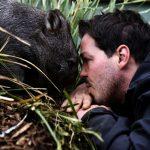 Der Wombat – plumper Pummel aus Tasmanien