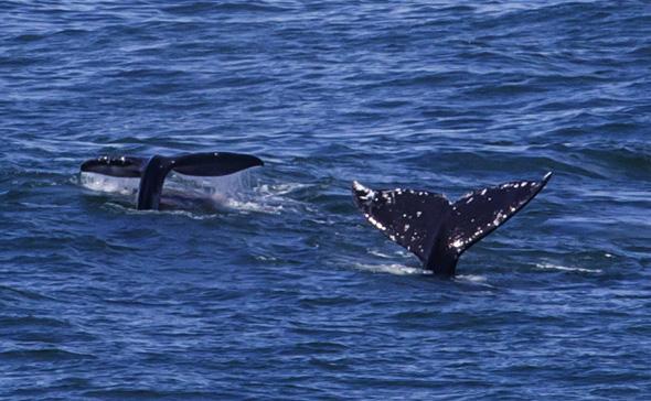 Whale Watch Week