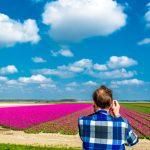 Neu in Flevoland: Eine farbenprächtige Tulpeninsel