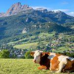 Corona und Cortina: Die Krise als große Chance?