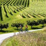 Radeln über Stock und Wein in der Südsteiermark