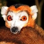 Madagaskar – Land der Naturphänomene