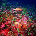Riesiges Korallenriff im Great Barrier Reef entdeckt
