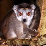 Entdeckungstour in Madagaskars Westen