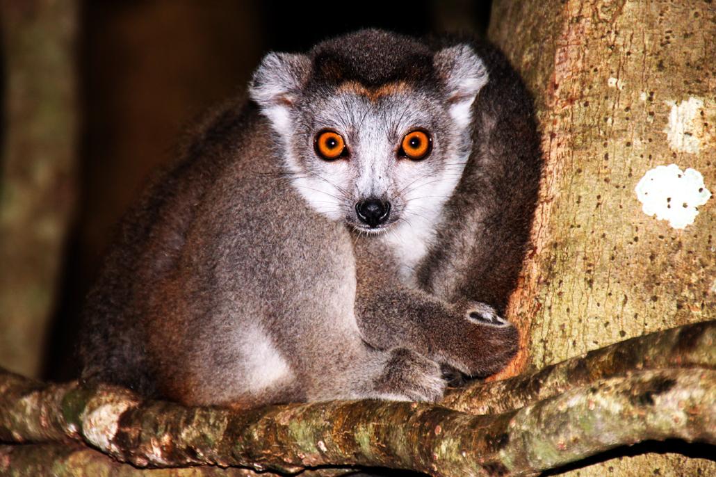 Madagaskars