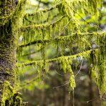Rangertour im Nationalpark Schwarzwald