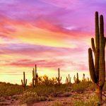 Pflanzenpracht aus der Sonora Wüste