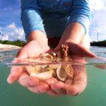Fort Myers: Von Edison, Fort und Calusa