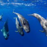 Neues Walschutzgebiet vor Teneriffa