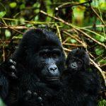 Uganda – unbekannte Schöne in Ostafrika