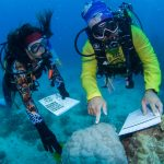 Hobby-Wissenschaftler als Helfer am Great Barrier Reef