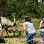Auf den Spuren der Koories durch Südostaustralien
