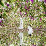 Tokio: Botanisches Feuerwerk für alle Sinne